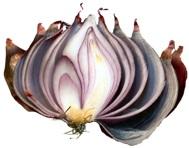 Onion1-trans-300x250